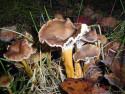 Tapeta Houby a houbičky 24