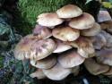 Tapeta Houby a houbičky 6