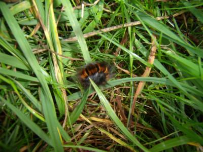 Tapeta: housenka v trávě