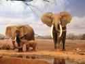 Tapeta Sloni