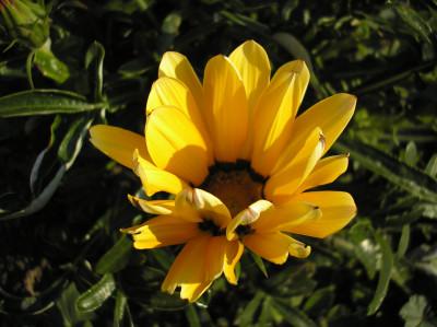 Tapeta: Jako slunečnice...