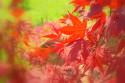 Tapeta Japonská zahrada