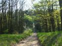 Tapeta Jarní cesta