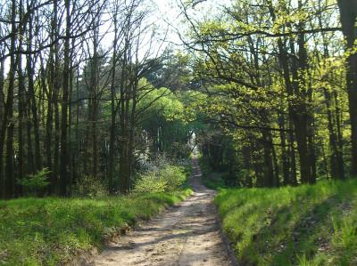 Tapeta: Jarní cesta
