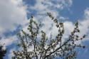 Tapeta jarní krásy