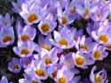 Tapeta Jarní květena