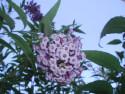 Tapeta Jarní květena 1
