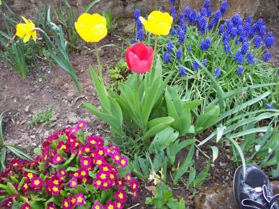Tapeta: Jarní květiny