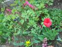 Tapeta Jarní květiny 1