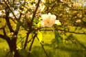 Tapeta Jarní květy