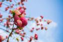 Tapeta Jarní květy detail