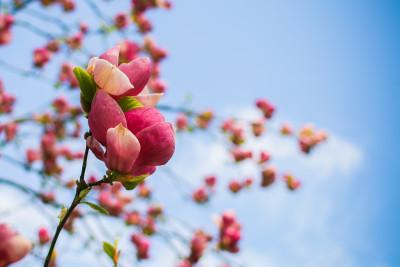 Tapeta: Jarní květy detail