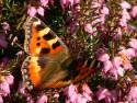 Tapeta jarní motýl