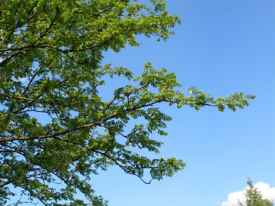 Tapeta: Jarní obloha