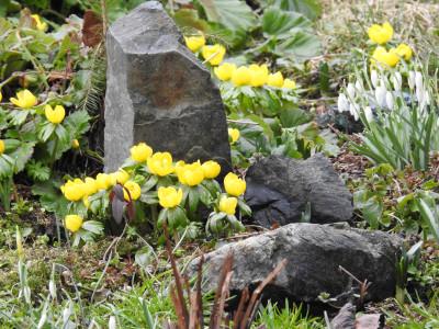 Tapeta: Jarní skalka