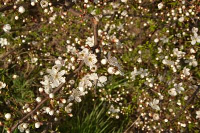 Tapeta: Jaro je tady zase