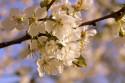 Tapeta Jaro květy