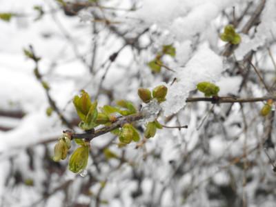 Tapeta: Jaro nebo zima