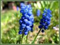 Tapeta Jaro v modrém