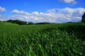 Tapeta Jaro v polích