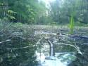 Tapeta jezero v lese