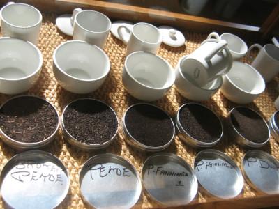 Tapeta: Je libo čaj?