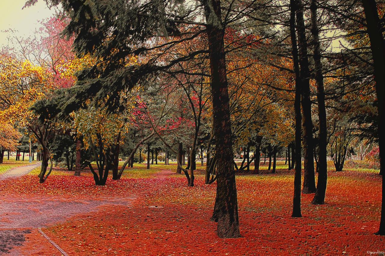 Tapeta jesen_v_parku