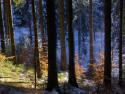 Tapeta Zimní les