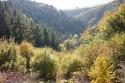 Tapeta jesenna dolina