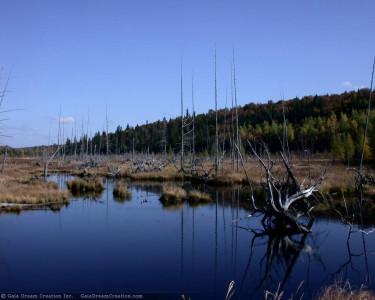 Tapeta: Jezero 5
