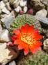 Tapeta Kaktus3