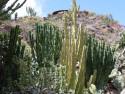 Tapeta kaktus GC 10