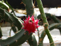 Tapeta Kaktus_KN