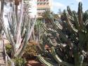 Tapeta kaktus u hotele GC