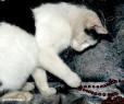 Tapeta kočičí hry