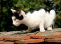 Tapeta kočičí mazel