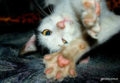 Tapeta: kočičí protahování