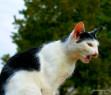 Tapeta kočičí zpěv