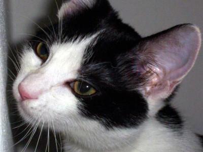 Tapeta: Kočička
