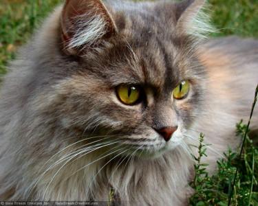 Tapeta: Kočička od Gaia Dream Creation 2