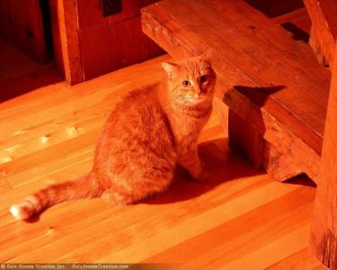 Tapeta: Kočička od Gaia Dream Creation 3