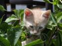 Tapeta Kočička v křoví