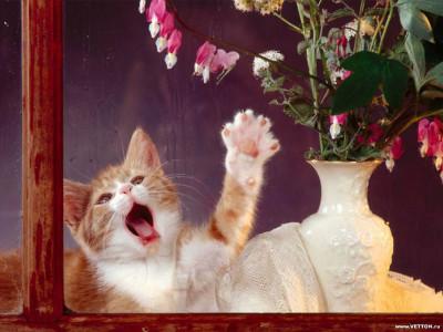 Tapeta: Kočičky 10
