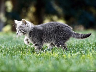 Tapeta: Kočičky 12