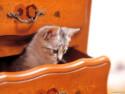 Tapeta Kočičky 14