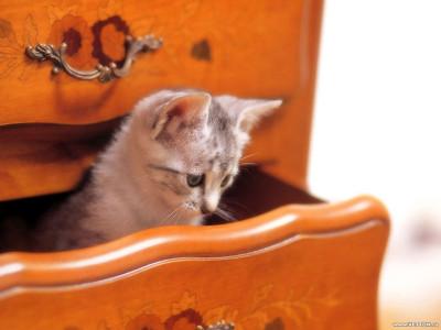 Tapeta: Kočičky 14