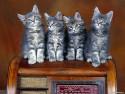 Tapeta Kočičky 3