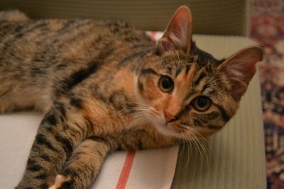 Tapeta: Kočka 1
