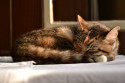 Tapeta Kočka 2