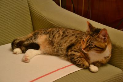 Tapeta: Kočka 4